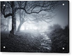 The Old Forest Acrylic Print