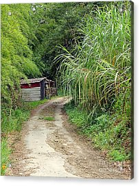 Acrylic Print featuring the photograph The Old Forest Road by Yali Shi