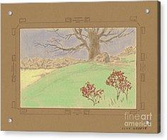 The Old Gully Tree Acrylic Print