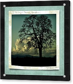 The Old Oak Acrylic Print by Bonnie Bruno