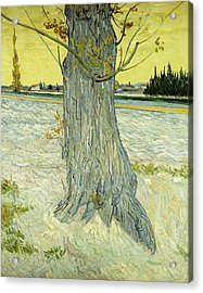 The Old Tree Acrylic Print by Vincent Van Gogh