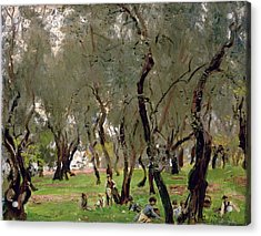 The Olive Grove Acrylic Print