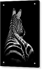 The On Looker Acrylic Print by Paul Neville