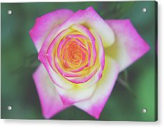 The One That You Love Acrylic Print