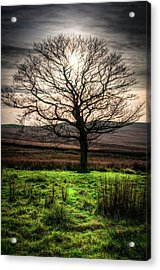 The One Tree Acrylic Print