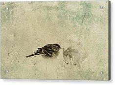 The Orange And Sparrow Acrylic Print