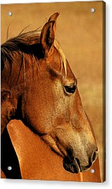 The Orange Horse Acrylic Print