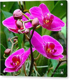 Acrylic Print featuring the photograph The Orchid Dance by Sue Melvin