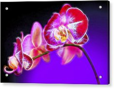 The Orchid Watches II Acrylic Print