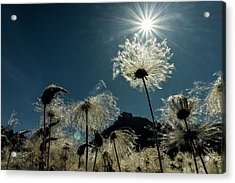 Acrylic Print featuring the photograph The Other World by Fred Denner