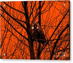 The Owl . Orange Acrylic Print by Wingsdomain Art and Photography