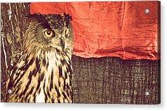 The Owl Acrylic Print by Pedro Venancio