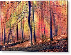 The Painted Woodland Acrylic Print