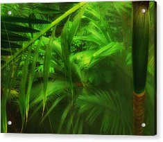Acrylic Print featuring the photograph The Palm Forest  by Connie Handscomb