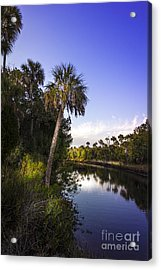 The Palm Stream Acrylic Print by Marvin Spates