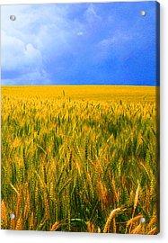 The Palouse Wheat Fields Acrylic Print