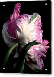 The Parrot Tulip Queen Of Spring Acrylic Print