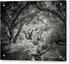 The Path Acrylic Print by Joseph Smith