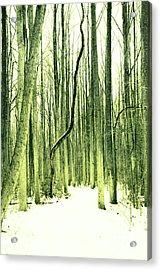 The Path Less Taken Acrylic Print