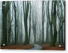 The Path Acrylic Print by Martin Podt