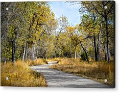 The Path Acrylic Print by Michael  Brungardt
