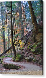The Path Acrylic Print by Peter  McIntosh