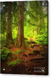 The Path Through The Forest Acrylic Print