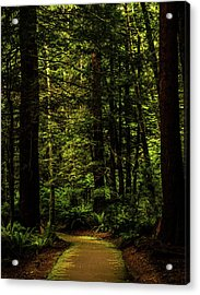 Acrylic Print featuring the photograph The Path by TL Mair