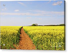 The Path To Bosworth Field Acrylic Print by John Edwards