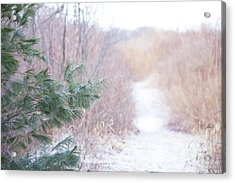 The Path Untraveled  Acrylic Print