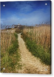 The Pathway Home Acrylic Print by Tom Gari Gallery-Three-Photography