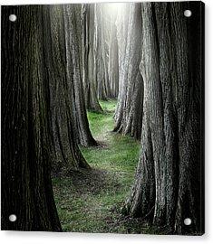 The Pathway Acrylic Print by Ian David Soar