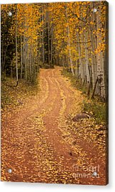 The Pathway To Fall Acrylic Print by Ronda Kimbrow