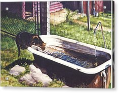 The Paws That Refreshes Acrylic Print by Marion  Hylton
