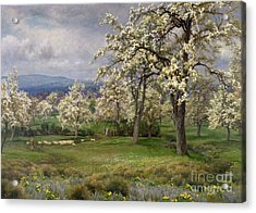 The Pear Orchard Acrylic Print by Alfred Parsons