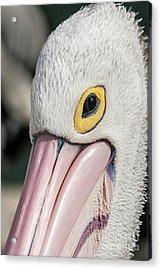 The Pelican Look Acrylic Print by Werner Padarin