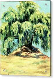 The Pepper Tree Acrylic Print by Helen O Hara