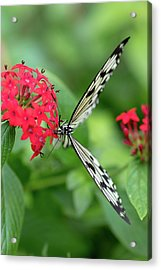 The Perfect Butterfly Land Acrylic Print