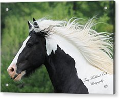 The Perfect Stallion  Acrylic Print by Terry Kirkland Cook