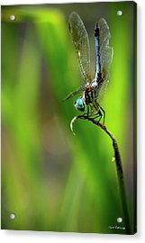 Acrylic Print featuring the photograph The Performer Dragonfly Art by Reid Callaway