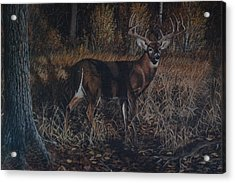 The Phantom Buck Acrylic Print
