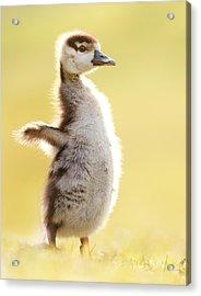 The Pinguin Simulator Acrylic Print
