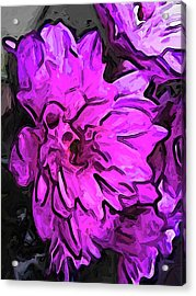 The Pink Flower With The Lavender Edges Acrylic Print