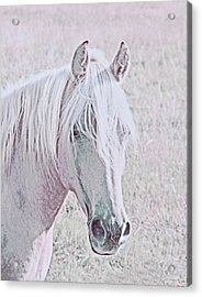 Acrylic Print featuring the photograph The Pink Horse by Jennie Marie Schell