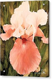 The Pink Lady  Acrylic Print