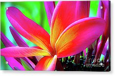Acrylic Print featuring the photograph The Plumeria Flower by D Davila