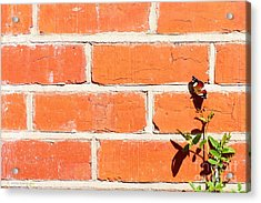 The Poetry Of Ordinary Things Acrylic Print