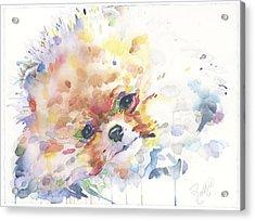 The Pomeranian Acrylic Print