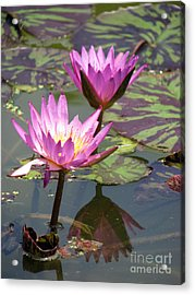 The Pond Acrylic Print by Amanda Barcon