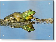 The Pond King Acrylic Print by Mircea Costina Photography
